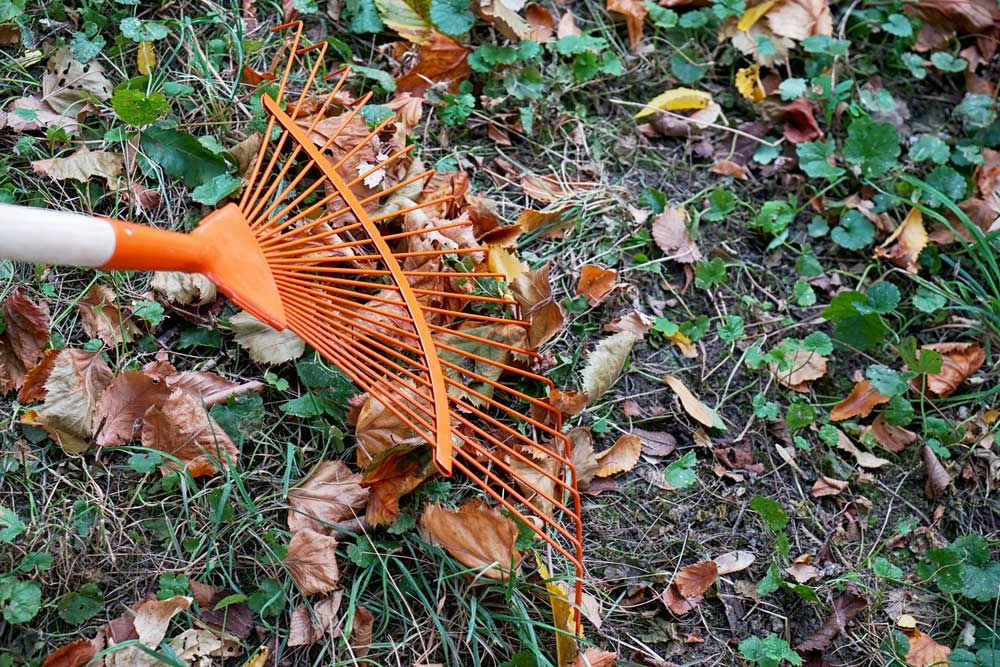 Don't Leaf Your Yard In A Mess